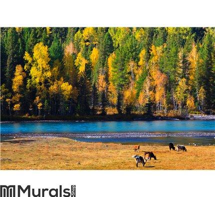 Autumn colors, Kanas, Xinjiang China Wall Mural Wall art Wall decor