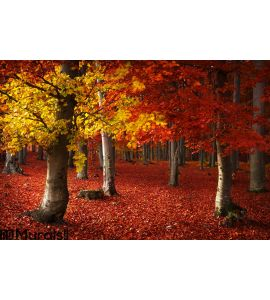 Autumnal forest environment Wall Mural