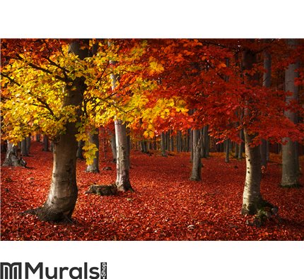 Autumnal forest environment Wall Mural Wall art Wall decor