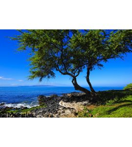 Beach Tree Vision Wall Mural