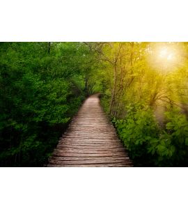 Deep forest pathway in the sunshine Wall Mural
