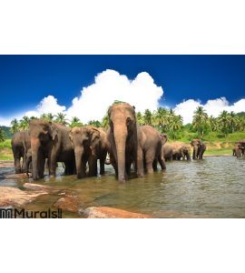 Elephants in the jungle Wall Mural Wall art Wall decor