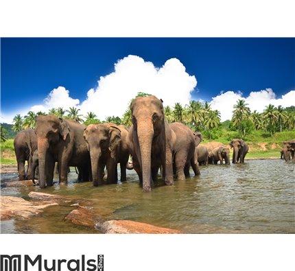 Elephants in the jungle Wall Mural Wall art Wall decor